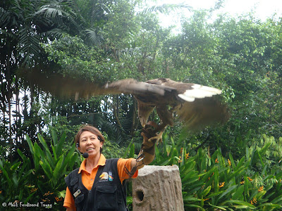 Jurong Bird Park - Kings of the Skies Show Photo 13