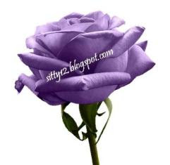 Mawar Ungu MyHeart