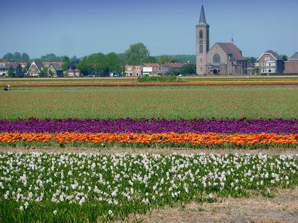kebun bunga di belanda