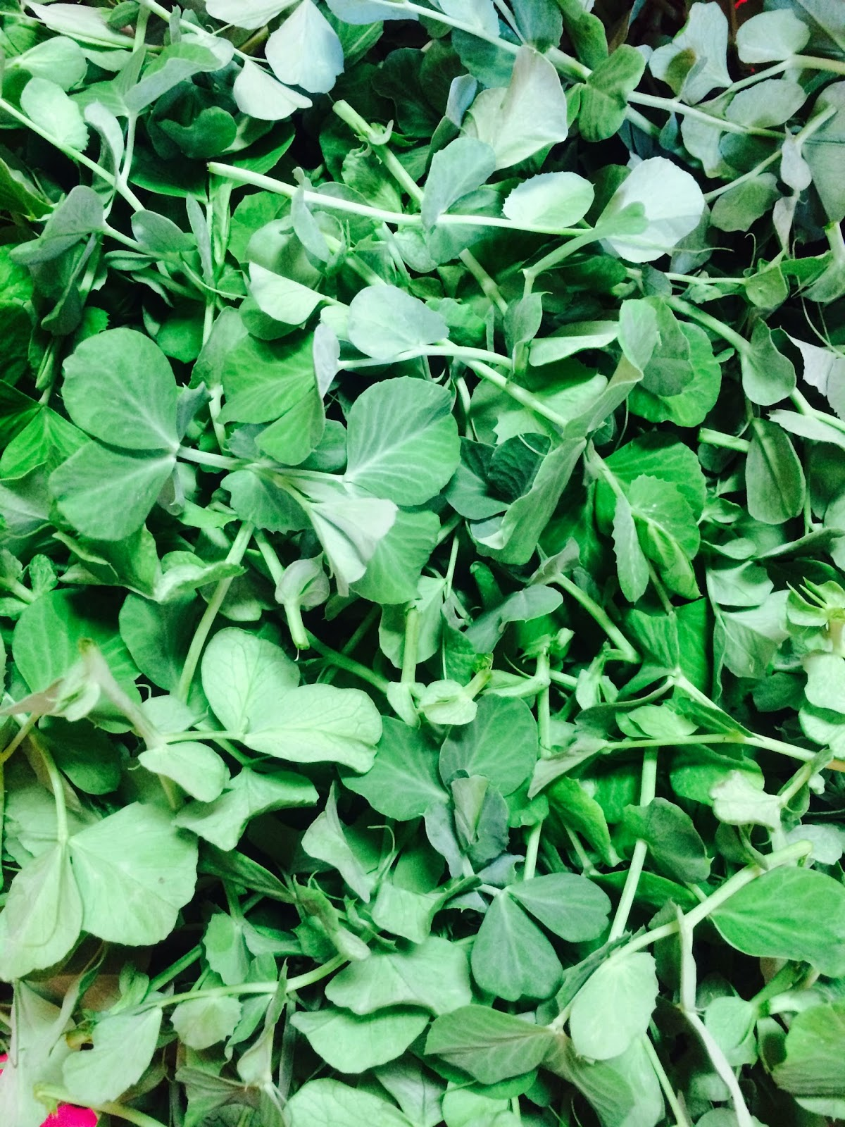 ... pea shoots are delicate and sweet and taste like the pea pods