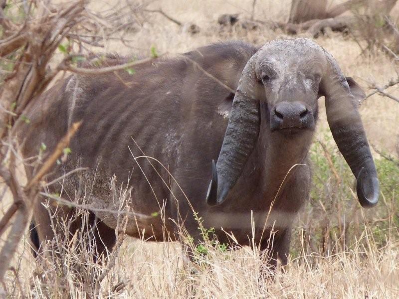 Real Animal Mutations | www.imgkid.com - The Image Kid Has It!