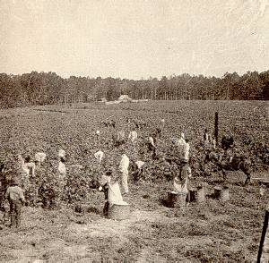 sociaal laid slavernij