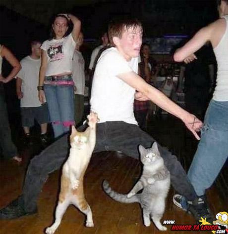 Enquanto isso em uma festa qualquer - Homem bebado dançando com gatos