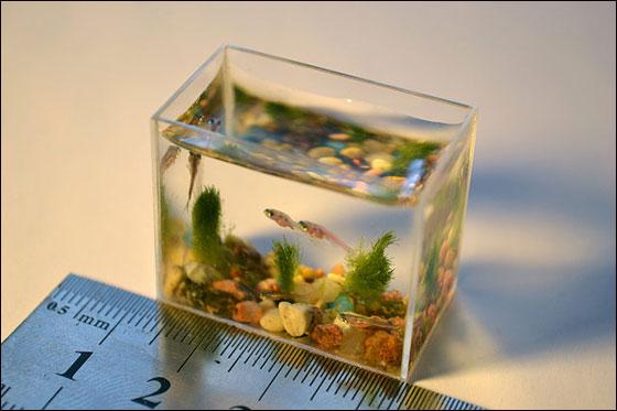 aquarium4.jpg