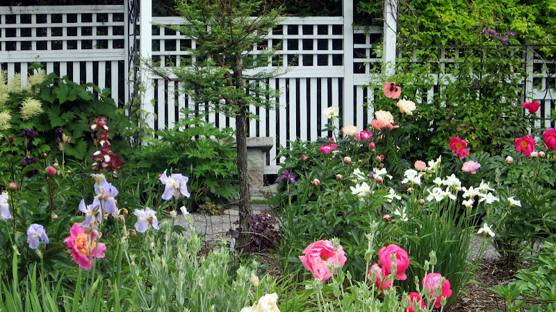 Canadian peony society visite du jardin de dorren et for Jardin a visiter 78