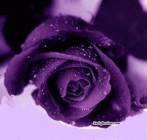 Fany Sekuntum Bunga Berwarna Ungu