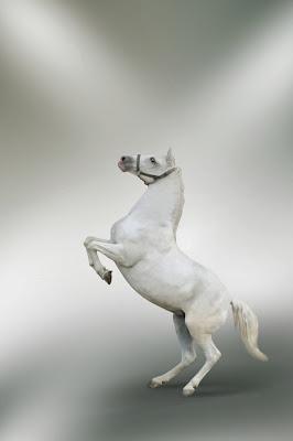 kuda berdiri asli
