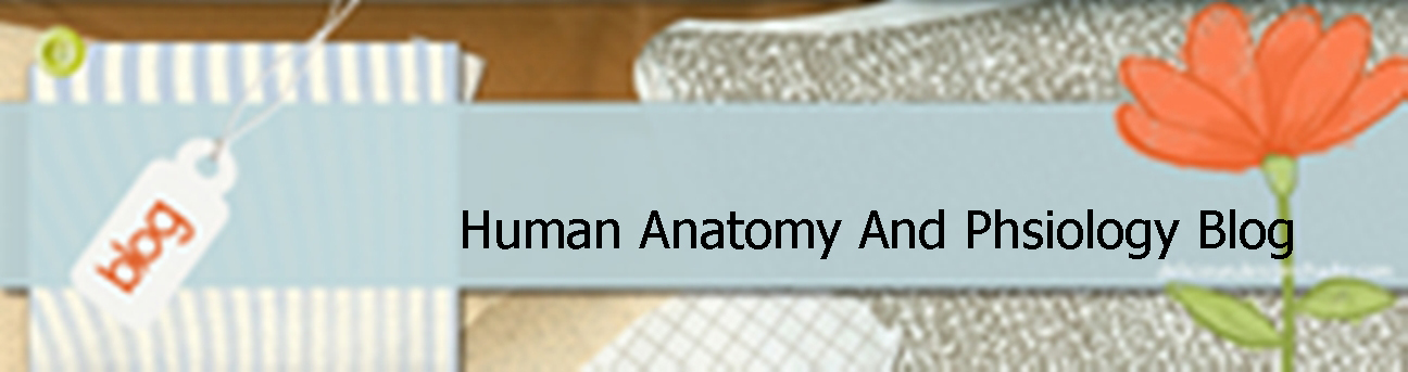 [a&p] Human Anatomy And Physiology Blog