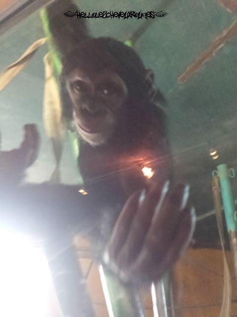 Bébé singe qui nous tend la main près de nous à Touroparc