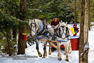 Sap Gathering Contest, Keene, New Hampshire, Stonewall Farm,