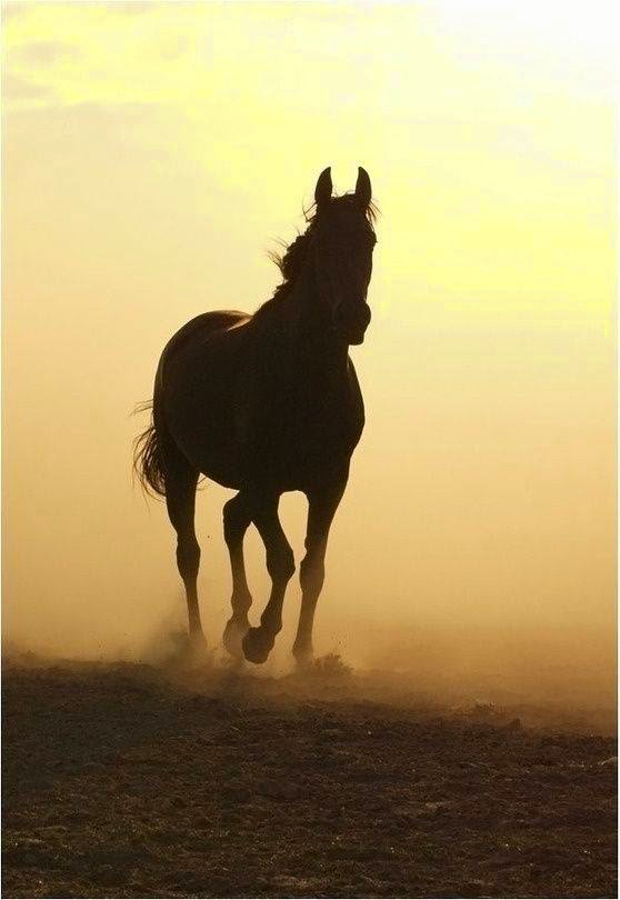 Lovely Life: Helende kracht van Paard