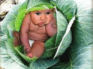 smiješne slike bebe kupus