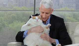 Anderson Cooper, cat, fat cat, awkward