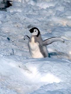 Foto Bayi Pinguin Lucu