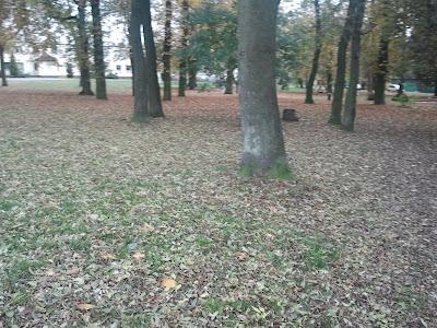 Jesienny spacerek :)