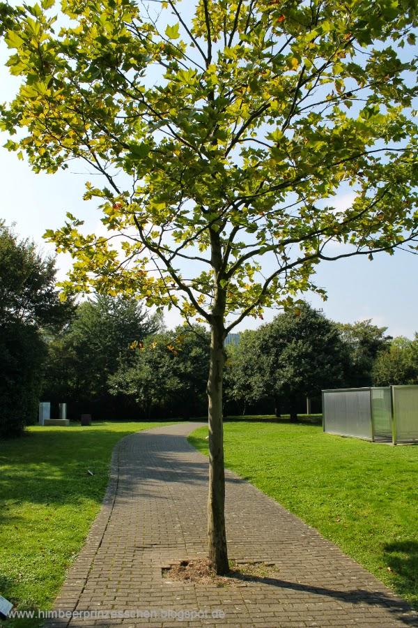 12 von 12 12 v 12 Skulpturenpark Köln Baum auf Weg gepflanzt