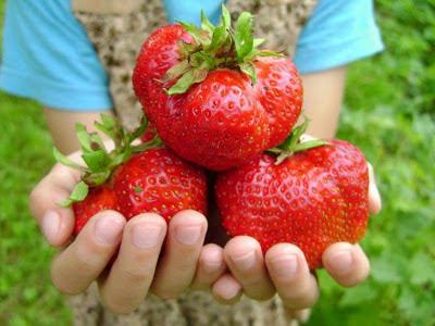 frutillas gigantes