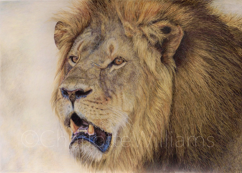 behind the scenes at stuart ng books  cecil the lion