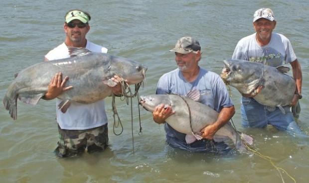 International fishing news 2012 08 for Blue cat fishing