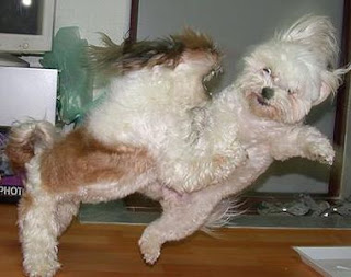 Funny Dogs Fighting
