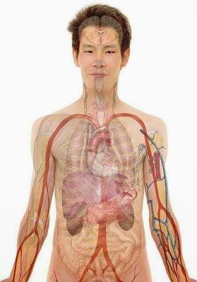 Smart Organs