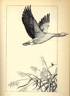 ilustración vintage pato para scrapbooking y decoupage
