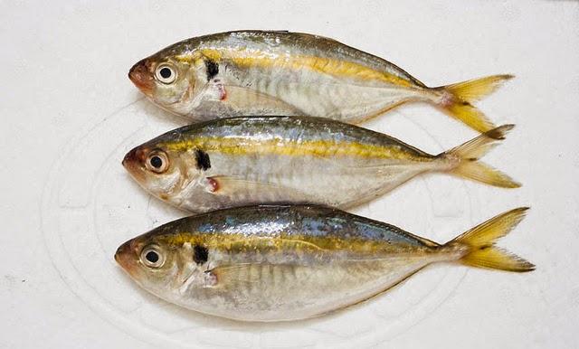 Cá Chỉ Vàng - Cá Tươi Phan Thiết - Đánh Bắt Trong Ngày