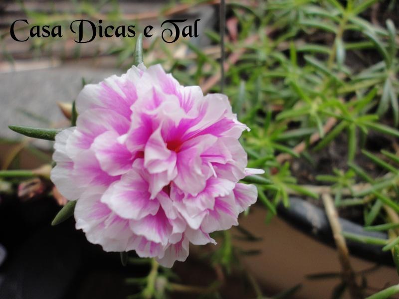 planta é perfeita para cultivo em espaços pequenos,como vasos