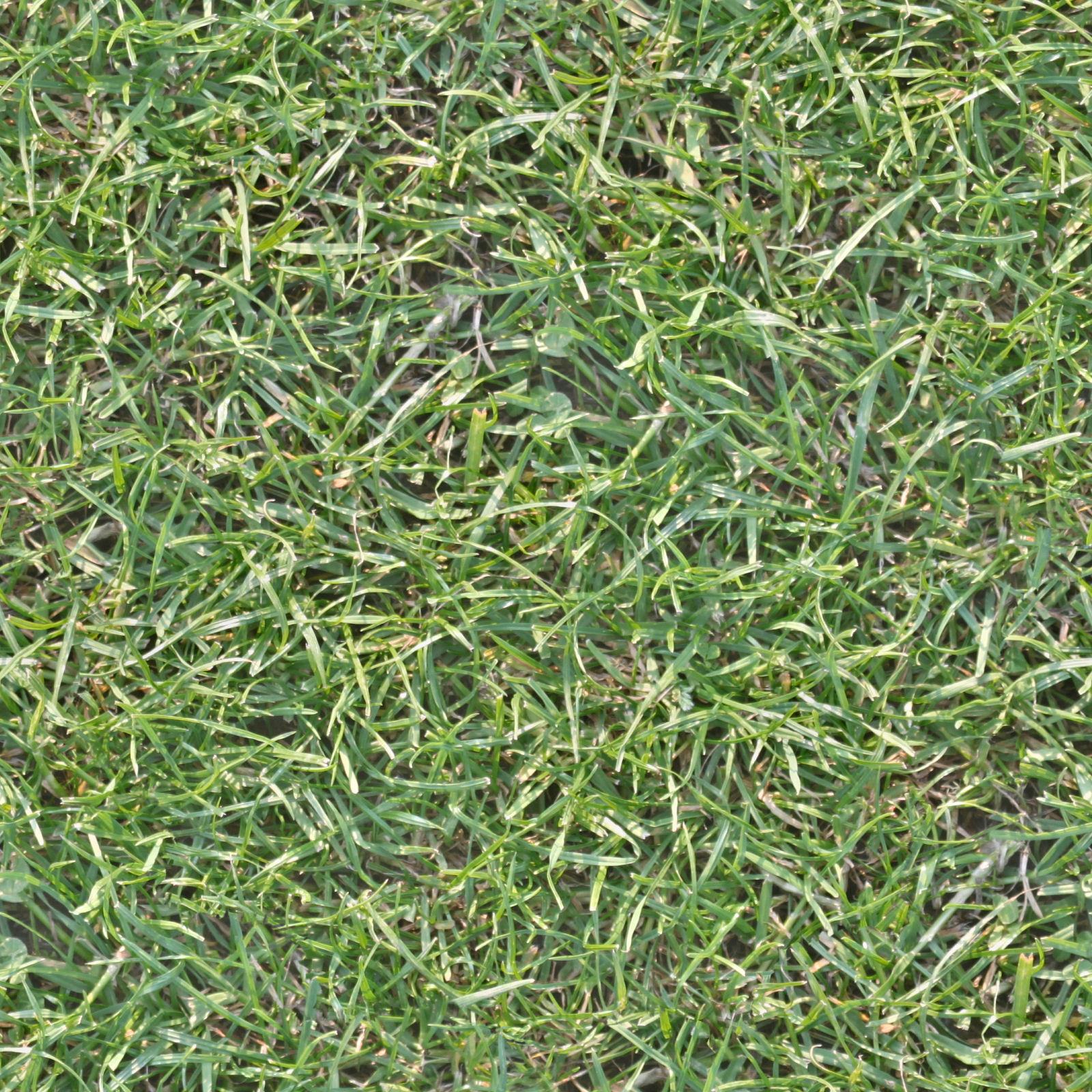 High Resolution Seamless Textures Seamless high res grass texture