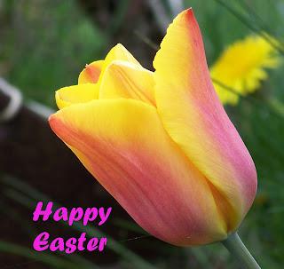 Easter Greetings - Tulip