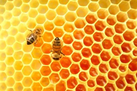 Khasiat madu asli untuk memulihkan stamina