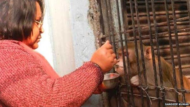 Shabista alimenta Chunmun com leite, frutas e alimentos cozidos
