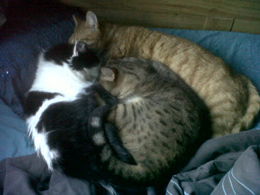 Three of my totally unrelated rescued cats having snuggles, they are an odity but bless them x