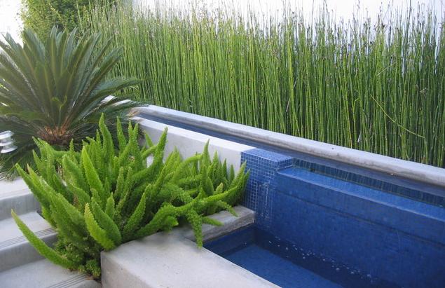 Mid century modern plants images for Modern ornamental grasses