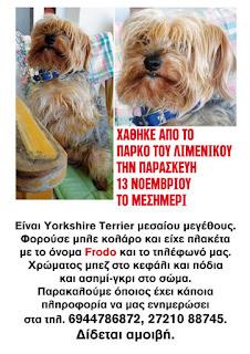 Χάθηκε yorkshire terrier με μπλε κολάρο από το πάρκο του Λιμενικού, Καλαμάτα