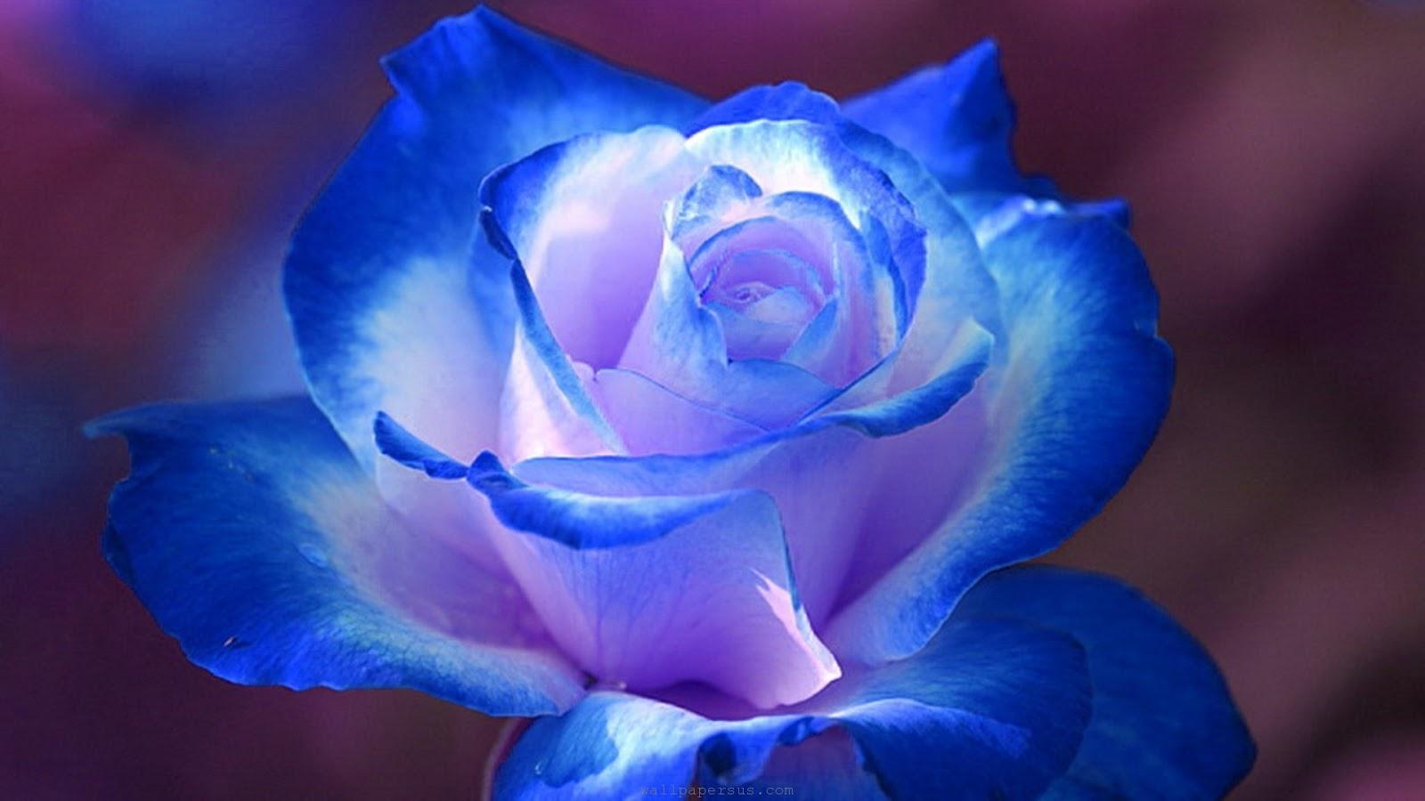Flowers roses blue