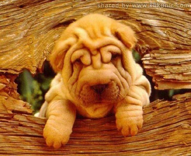 http://2.bp.blogspot.com/-hzkRSmvDIJM/TXzGA0IAdvI/AAAAAAAARFo/Q401U0tKw1Q/s1600/these_funny_animals_635_640_31.jpg