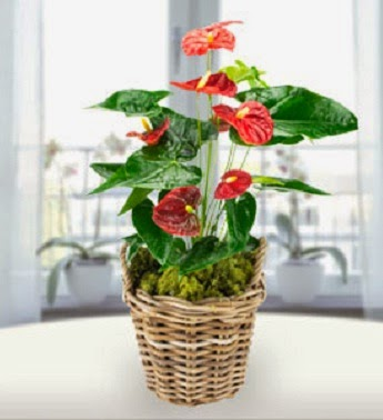Russia Online flowers delivery and price