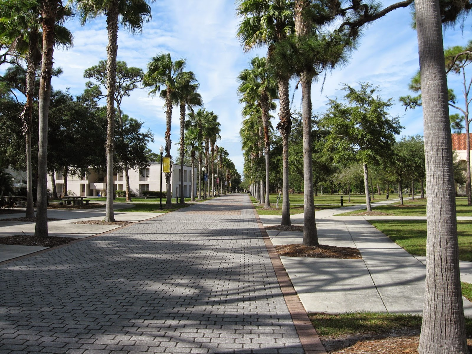 NEW COLLEGE OF FLORIDA: What should I keep in mind when defending my undergraduate thesis?