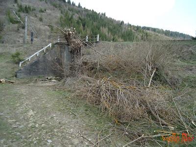 Curatare copaci primavara