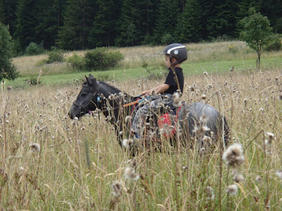 Orawa, Lipnica Wielka, Babia Góra, konie, kucyki, jazda konna, jazda w terenie