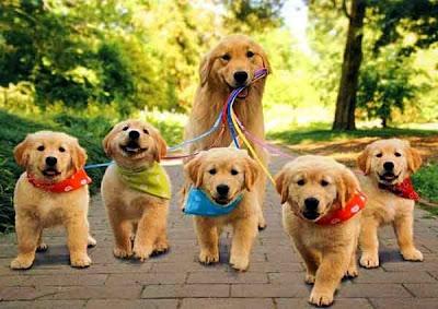 dẫn cún ra ngoài đi bộ