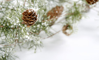 Image of a pine cone in winter