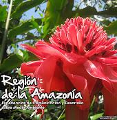 Región de la Amazonía