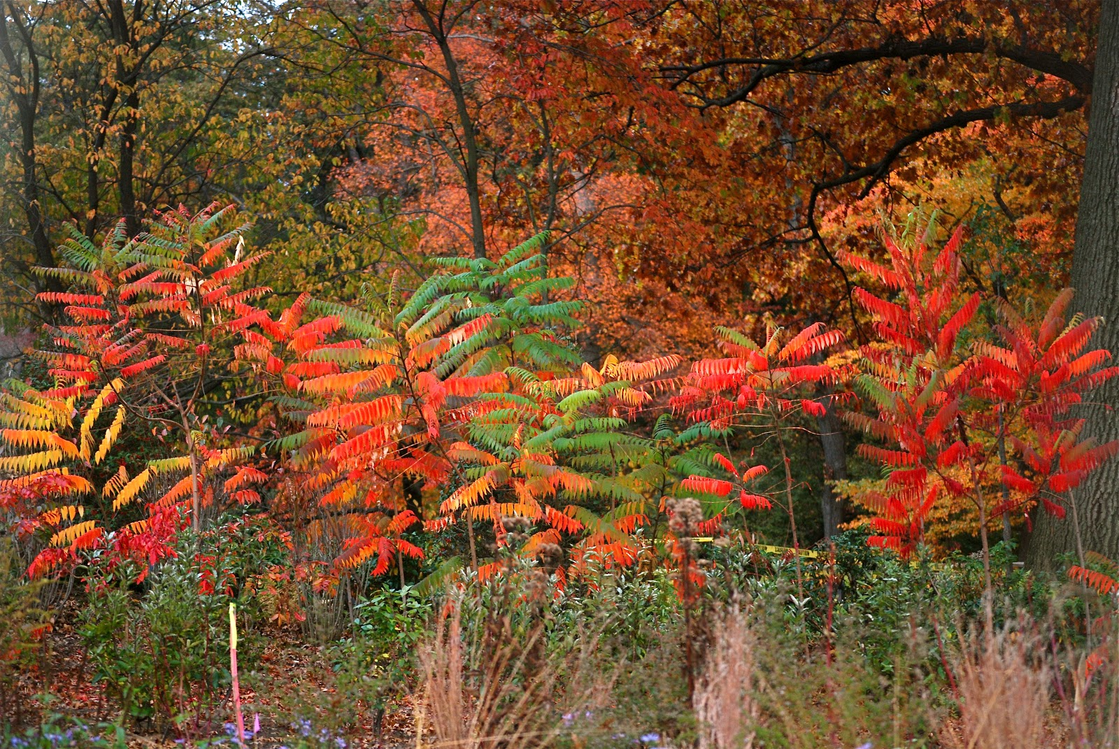 Autumn Foliage At The New York Botanical Garden