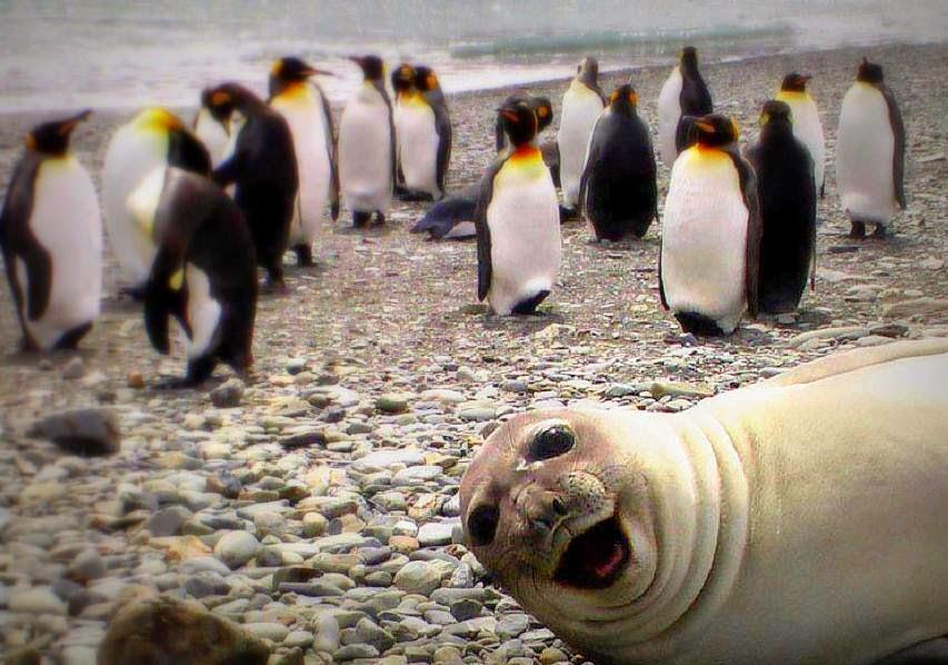 Trend Masa Kini - Jom Selfie!