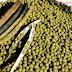 Cara Budidaya Kacang Hijau Agar Panen Melimpah
