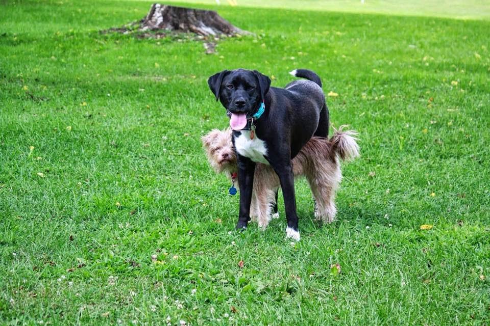 Daisy & Lily
