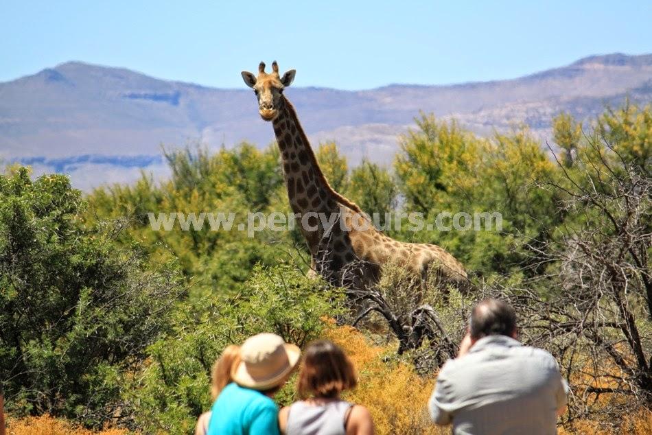 Safari park near Hermanus