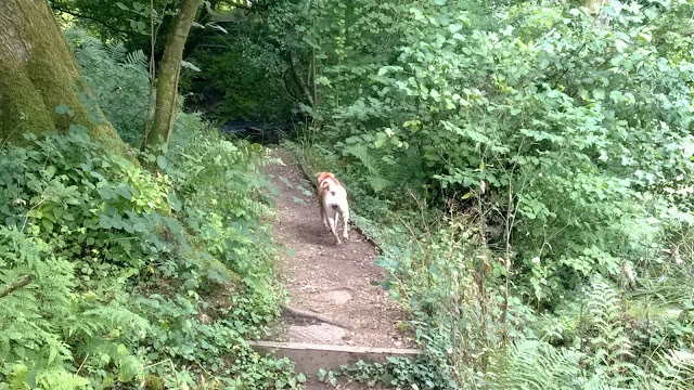 Woodchester dog walk